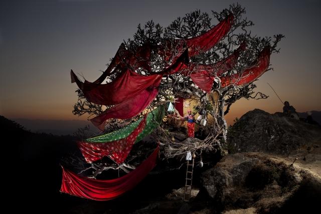 Nicolas Henry, Boudhakumari Dhakal dans l'arbre sacré de Deurali, Népal, 2008, Tirage numérique sur dibond, 100 x 144 cm