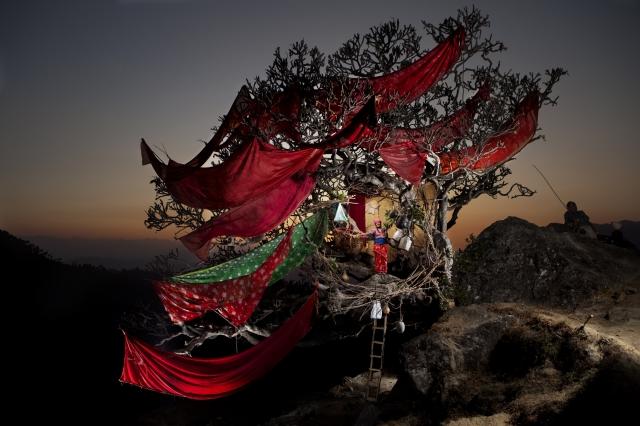 Boudhakumari Dhakal dans l'arbre sacré de Deurali, Népal © Nicolas Henry