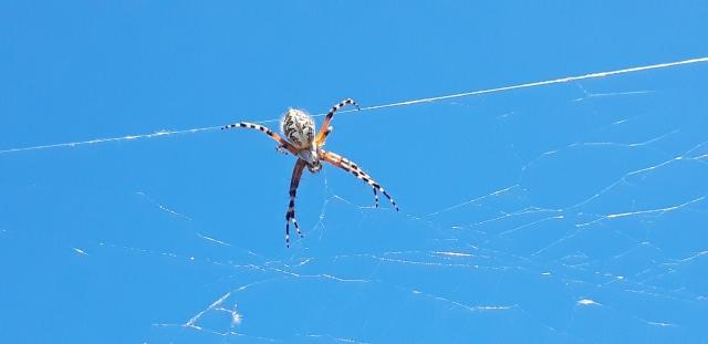 Je serai bientôt Spiderman ! - Photo de Maxence Marius.