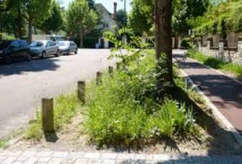 Végétation au pied des arbres